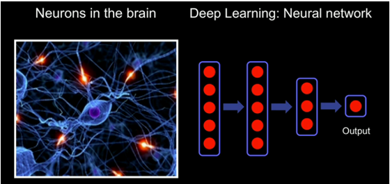 Neurons-Deep Learning.PNG