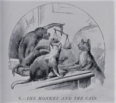 The Monkey and the two cats_2